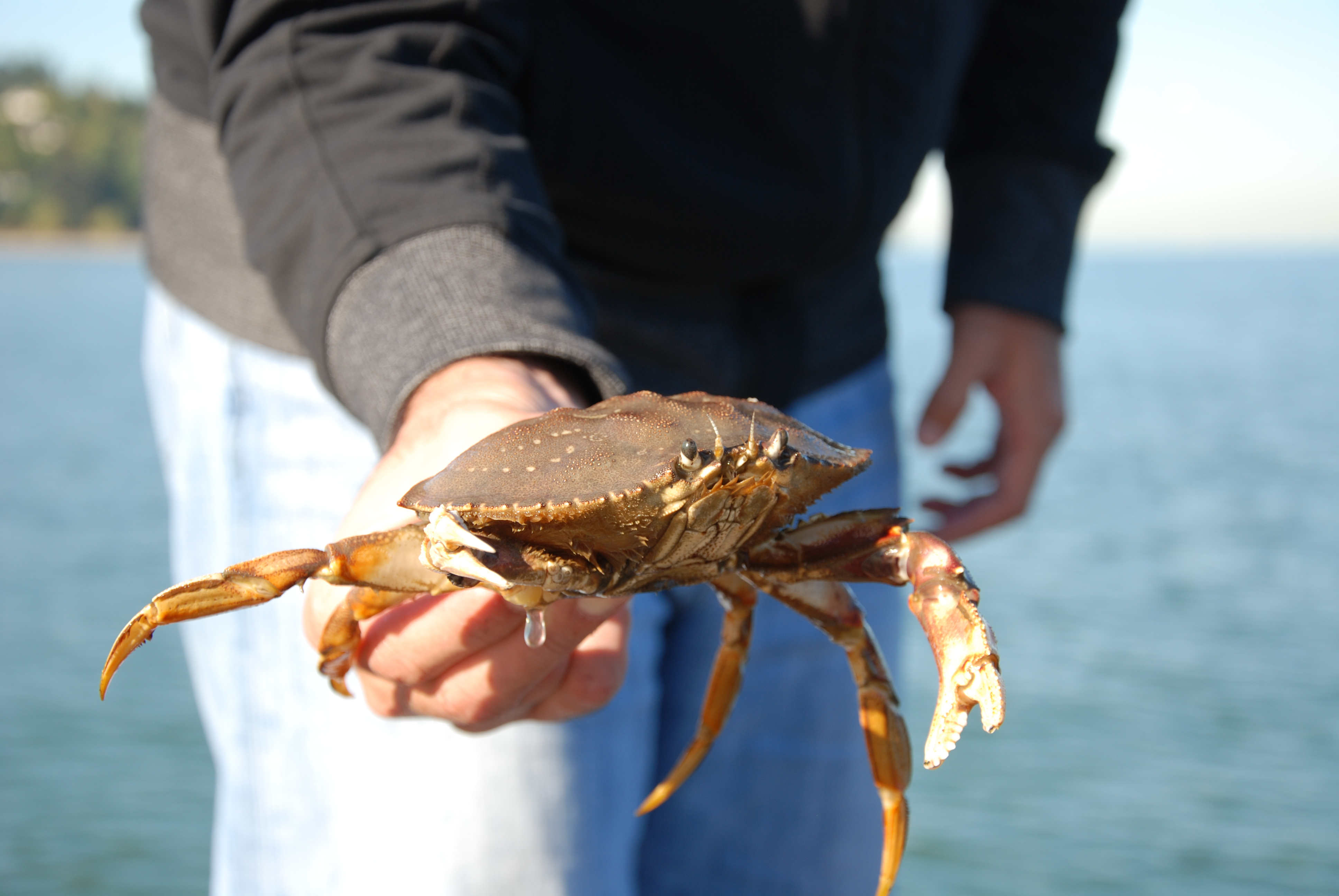 Getting Crabby in Vancouver